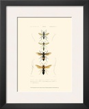 Antique Bees II Prints by  Blanchard