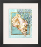 Conch Shell and Coral Poster by Lori Schory