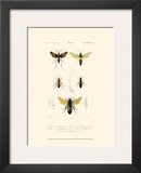 Antique Bees I Posters by  Blanchard