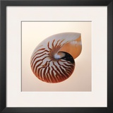 Nautilus Prints by Tom Artin
