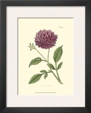 Mauve Beauty II Prints by Samuel Curtis