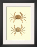Antique Crab III Art by James Sowerby