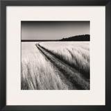 Oceanside Field Prints by Andrew Ren