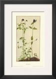 Three Medicinal Herbs: Pansy, Brunella, Anagallis Print by Albrecht Dürer