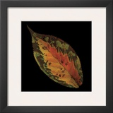 Cherry Leaf on Black Posters by June Hunter