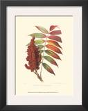 Smooth Sumac Print by  Sprague