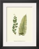 Woodland Ferns VI Art by Edward Lowe