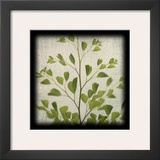 Maidenhair Fern Prints by June Hunter