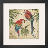 Macaw Prints by Betty Whiteaker