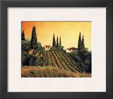 Vineyards of Tuscany Posters by Santo De Vita