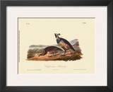 California Partridge Print by John James Audubon