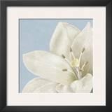 White Amarylis II Art by Linda Wood