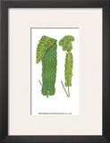 Woodland Ferns VIII Prints by Edward Lowe