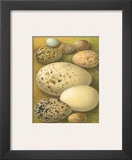 Bird Egg Collection I Prints