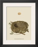 Antique Nest and Egg I Art by Reverend Francis O. Morris