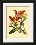 Orchid Splendor IV Posters