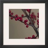 Red Berries I Prints by June Hunter