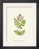 Woodland Ferns VII Posters by Edward Lowe