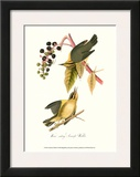 Warbler Poster by John James Audubon