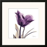 Royal Purple Parrot Tulip Print by Albert Koetsier