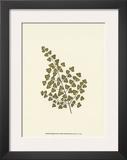 Woodland Ferns II Prints by Edward Lowe