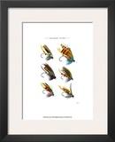 Salmon Flies II Prints