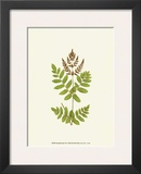 Woodland Ferns VII Print by Edward Lowe