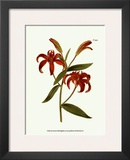 Fiery Florals I Prints by Samuel Curtis