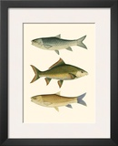 Antique Fish I Prints by Ernest Briggs