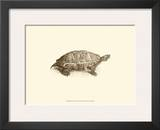 Sepia Turtle I Art by J. H. Richard