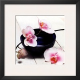 Orchid in a Bowl Prints by Stephane De Bourgies