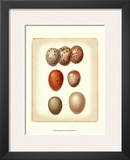 Bird Egg Study I Posters