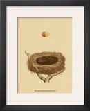 Antique Nest and Egg III Print by Reverend Francis O. Morris