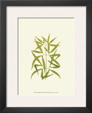 Woodland Ferns I Posters by Edward Lowe