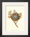 Antique Bird's Nest I Print by James Bolton