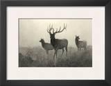 American Elk Print by R. Hinshelwood