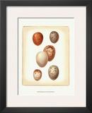 Bird Egg Study III Prints
