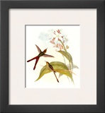 Small Gould Hummingbird III Art by John Gould