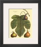 Fig Leaf II Poster by  Langley