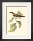 Nightingale Prints by John Gould