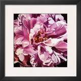 Pink Peony Prints by Jennifer Harmes