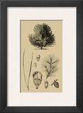 Arbor Study V Art