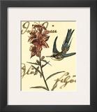 Hummingbird Reverie IV Poster