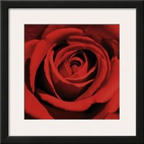 Red Rose Print by Laurent Pinsard