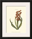 Antique Hyacinth V Posters by Christoph Jacob Trew