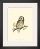 Tengmalm's Owl Prints by Reverend Francis O. Morris
