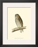 Short Eared Owl Prints by Reverend Francis O. Morris