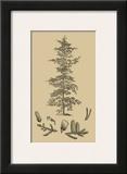 Arbor Study II Prints