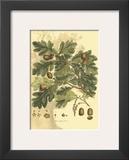 Antique Oak Tree Prints by  John Miller (Johann Sebastien Mueller)