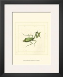 Green Mantis Prints